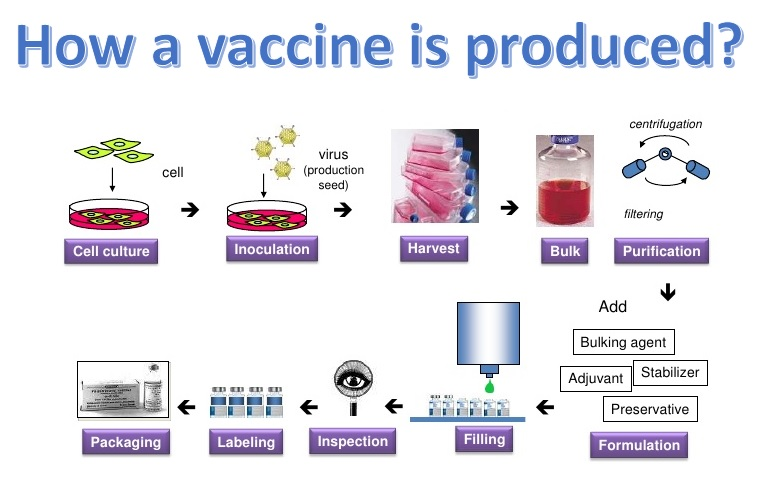 How a vaccine is produced: the process from cell culture, through purification to packing.